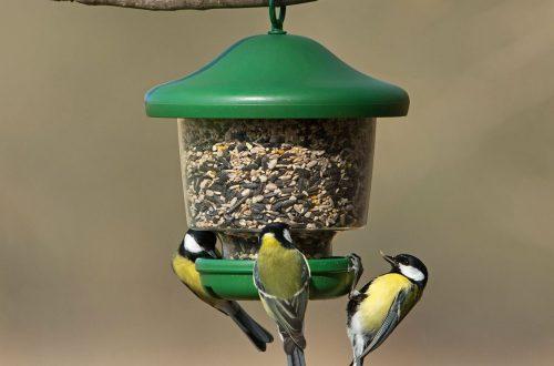 Óvjuk a városi madarakat
